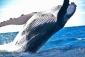 Win a 5-night Stay at Mantarays Ningaloo Beach Resort in Exmouth WA (no travel)