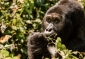 Win a 9-day G Adventures African Guided Tour for 2 people to see the Gorillas of Uganda